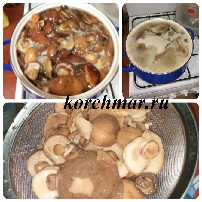рецеп на зиму грибов подсосновиков объявите, что обед
